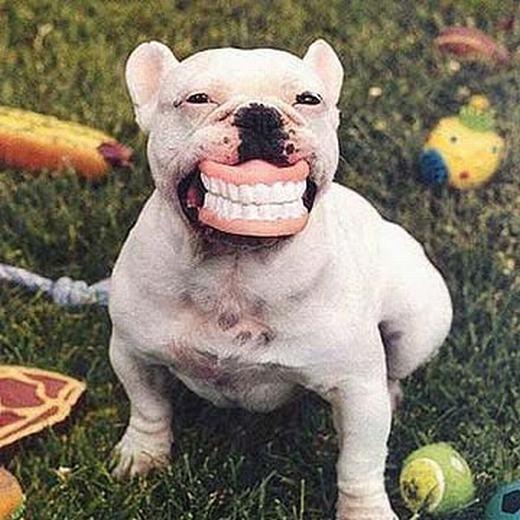 """""""Chưa già nhưngphải mang răng giả! Do ăn kẹo quá nhiều đây!"""". (Ảnh: Internet)"""