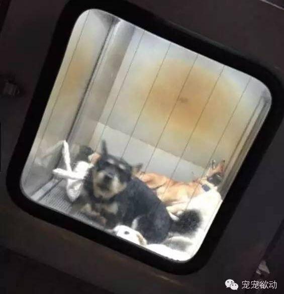Những cái kết bi thảm không ai tưởng tượng nổi của chó hoang ở Nhật