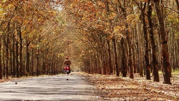 Những mùa thu vàng đẹp mê mẩn ở ngay Việt Nam