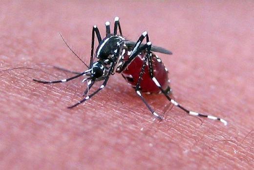 Không chỉ hút máu, chúng còn truyền nhiều bệnh nguy hiểm. (Ảnh: Internet)