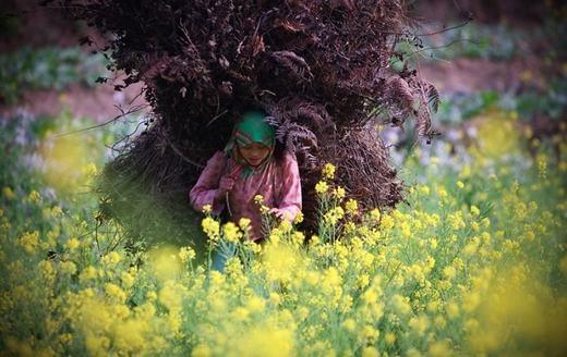 Thiếu nữ Hà Giang bên cánh đồng cải tuyệt đẹp. (Ảnh: Borepanda)