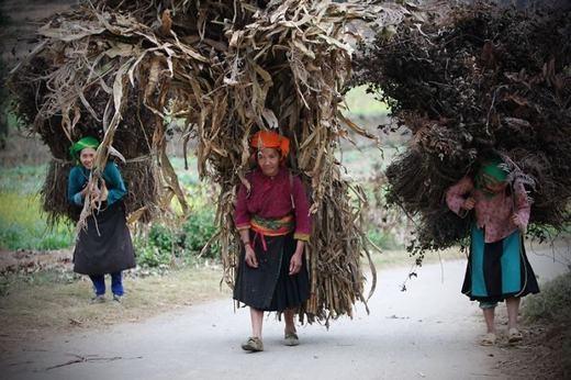 Những người phụ nữ Hà Giang với gánh củi lớn gấp nhiều lần cơ thể mình. (Ảnh: Borepanda)