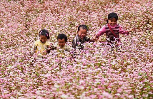 Những em bé Hà Giang đùa vui trên cánh đồng hoa. (Ảnh: Internet)