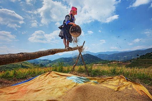 Nụ cười của những người nông dân được mùa lúa. Đối với họ, đó là niềm vui lớn nhất… (Ảnh: Internet)