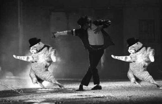 """""""Sau đây, Michael Mèo xin gửi đến điệu nhảy mới nhất!"""".(Ảnh: Internet)"""