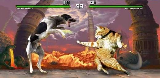 Không thể ngừng cười trước loạt ảnh mèo đã qua tay thánh photoshop