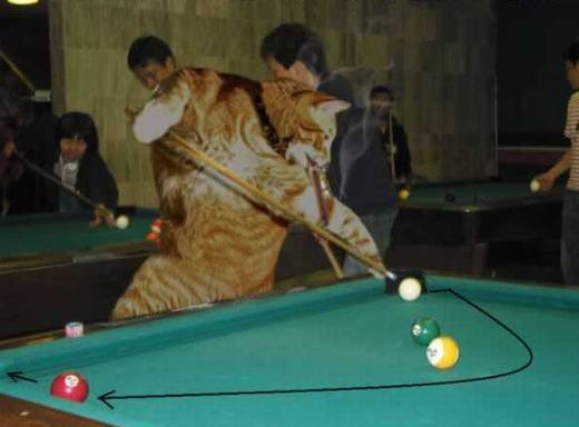 Cơ thủ mèo xuất chiêu đây!(Ảnh: Internet)