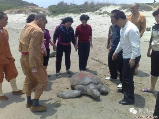 """Trước khi thả con rùa về biển ông Lâm đã viết lên lưng nó dòng chữ: """"Ngộ Duyên Hiệu phóng sinh"""". Ảnh: Internet"""
