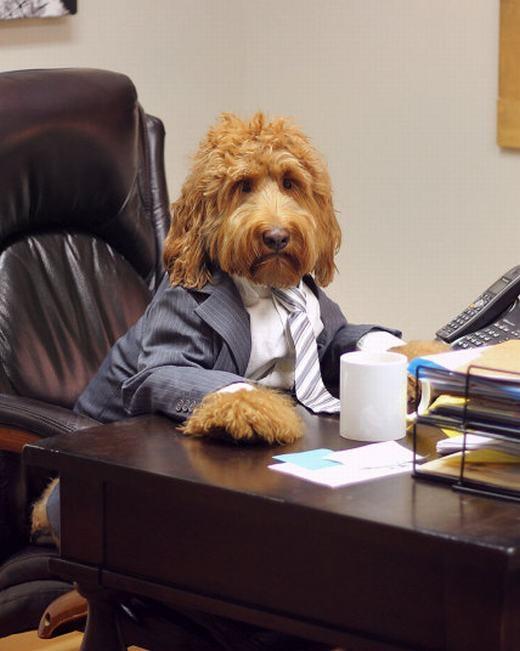 """Oliver – chú chó xù hiện đang """"làm mưa làm gió"""" trên mạng xã hội Instagram bởi phong cách thời trang siêu """"đỉnh"""" của mình. (Ảnh: Internet)"""