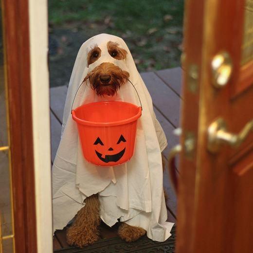 """Hóa trang cực """"chất"""" ngày Halloween.(Ảnh: Internet)"""