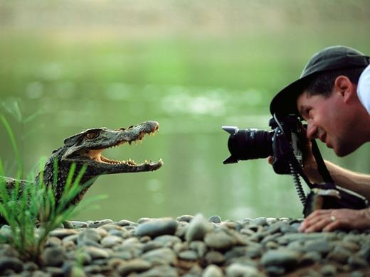 """""""Cười tươi lên, chuẩn bị chụp đây!"""". (Ảnh:Boredpanda)"""