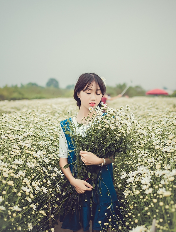 Vườn cúc họa mi trắng xóa, cô gái trẻ mơ màng khoe sắc bên hoa.(Ảnh: Internet)
