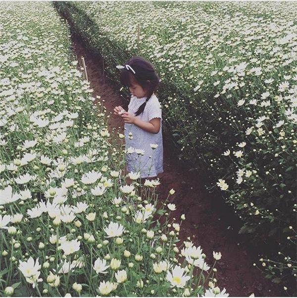 Cô nhóc đáng yêu diệnchiếc đầm trắng trong vườncúc họa mi vô cùng dễ thương. Chỉ cần ngắm nhìn bức ảnh cũng khiến bao người mỉm cười hạnh phúc.(Ảnh: Intasgram heatung)