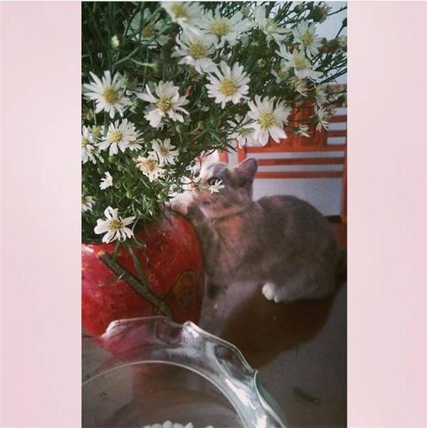 """Cho tới chú mèo đáng yêu này cũng không thể """"làm ngơ"""" trước vẻ đẹp của cúc họa mi. Vậy mới thấy, loài hoa nhỏ bé này chứa đựng nét đẹp, sự tinh tế tới kì lạ. (Ảnh Instagram thuongbep)"""