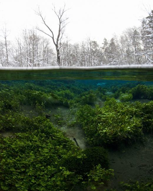 Khung cảnh đối lập trên và dưới mặt nước. (Ảnh: Internet)