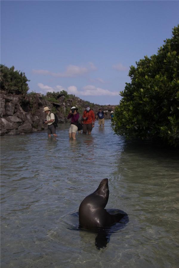 Năm1959, để kỉniệm 100 năm ngày Darwin công bố thuyết tiến hóa, chính quyền Ecuador tuyên bố biến 95% quần đảo Galapagos thành khu bảo tồn thiên nhiên quốc gia.(Ảnh: Bored Panda)