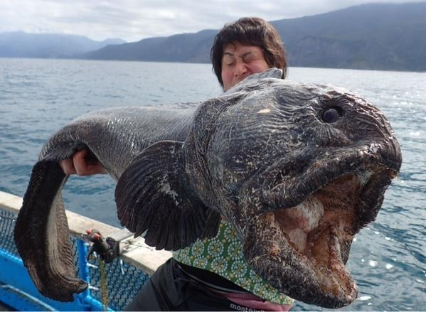 Chắc có lẽ do đặc thù vùng biển và người dân thường có sở thích khám phá thiên nhiên nên những sinh vật như thế này rất thường xuyên xuất hiện trên các bản tin thời sự.