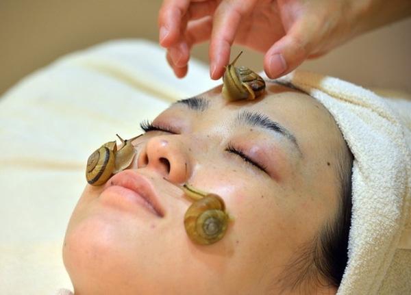 Liệu pháp làm đẹp kỳ dị cho ốc sên bò lên mặt để tăng cường sự săn chắc của làn da các chị em phụ nữ.