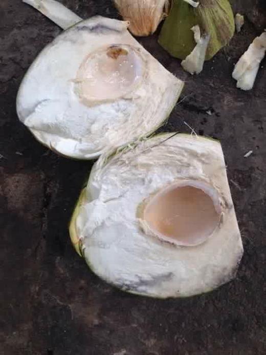 """Có lẽ quả dừa này không đủ để một người """"giắt răng"""". (Ảnh: Internet)"""