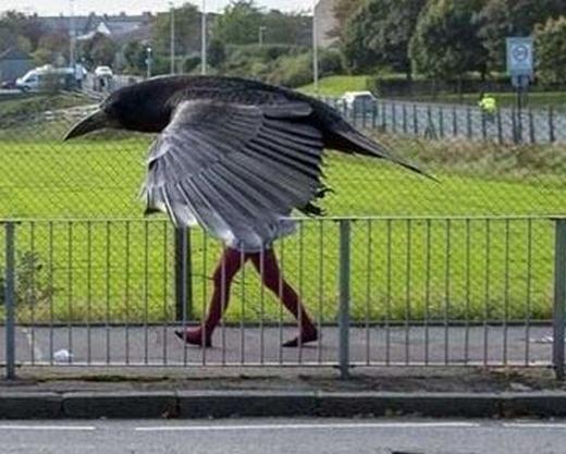 Loài chim gì đây nhỉ? (Ảnh: Internet)