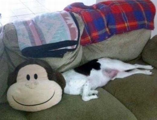 """""""Em là cún mặt khỉ nhé!"""". (Ảnh: Internet)"""