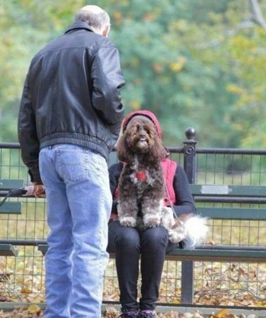 """""""Không có gấu, em hẹn hò với cún vậy!"""". (Ảnh: Internet)"""