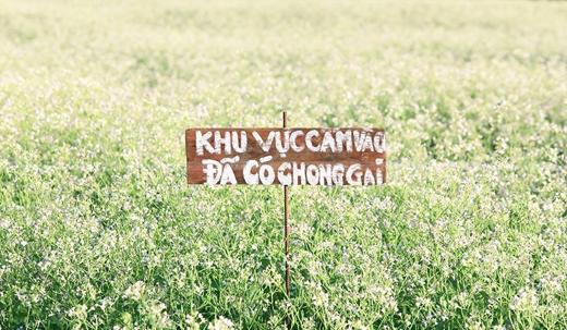 """Hình ảnh về những """"bảng cấm"""" du khách vào vườn hoa cải ở Lâm Đồng được cư dânmạng chia sẻ. Ảnh: FB"""