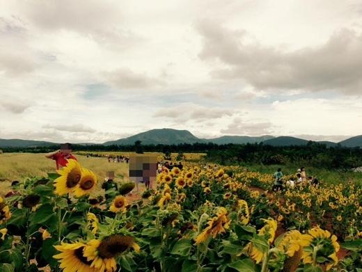 Du khách đến tham quan tại cánh đồng hoa hướng dương ở Lâm Đồng. Ảnh: FB