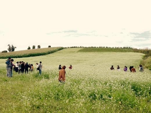 Du khách đến tham quan tại các cánh đồng hoa cải cũng từng gây ra nhiều ý kiến tranh cãi. Ảnh: FB