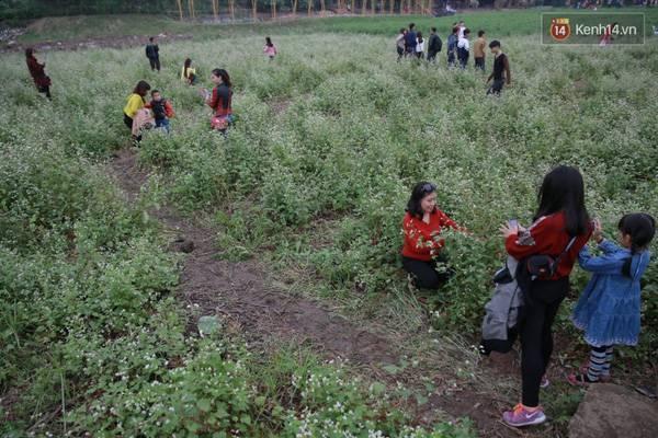 7.000 người kéo đến, thung lũng hoa Hồ Tây tan hoang sau hơn 2 ngày miễn phí