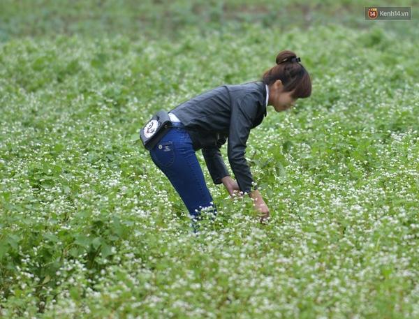 Nhiều bạn trẻ vô tư vặt hoa ngay giữa vườn.