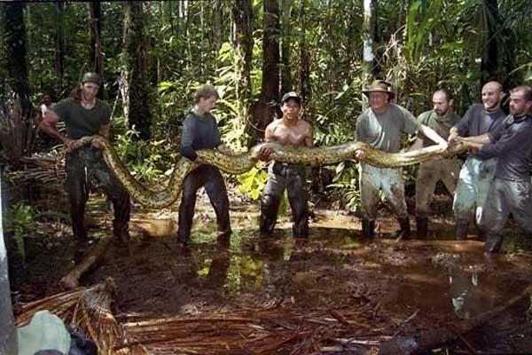 Trăn thường sống tại các khu rừng nhiệt đới ở châu Á và châu Phi. Người ta thường tìm thấy những chú trăn khổng lồ ở khu vực Amazon, Orinoco hay các khu rừng ở châu Á.