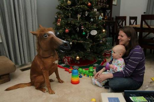 Gia đình này kết hợp cả Halloween với Noel chăng?(Ảnh: Internet)