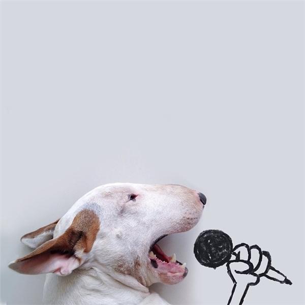 Bộ ảnh chế chú chó hài hước củaRafael Mantesso.