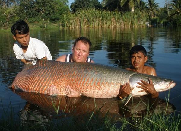 Phải tận 3 người mới ôm đủ một con cá. (Ảnh: Internet)