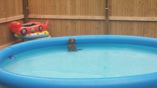 """""""Ta là cún 'đại gia', sở hữusiêu xe, bể bơi đàng hoàng nhé!"""". (Ảnh: Internet)"""
