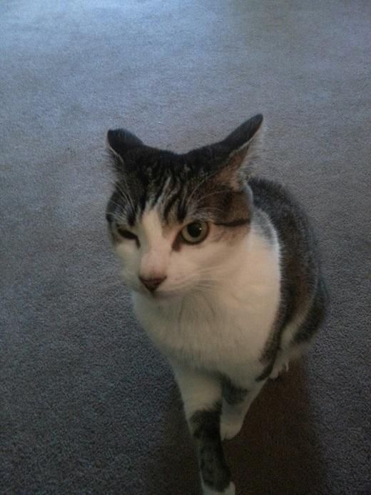 """Vừa mới quen một anh chàng và muốn biết anh ấy có phải là một chàng trai tốt không? Hỏi chú mèo nhà bạn đi nhé, """"thánh soi"""" đấy.(Ảnh: Internet)"""