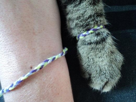 Thật tuyệt vời biết bao nếu bạn có một người bạn thân là mèo đấy. (Ảnh: Internet)