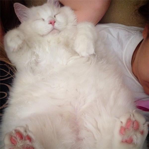 Không phụ lòng chủ, Silas hồi phục nhanh chóng và trở thành một chú mèo vừa xinh xắn vừa khỏe mạnh.(Ảnh: Bored Panda)