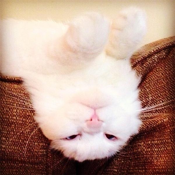 Silas cũng biếttự sướng đấy nhé!(Ảnh: Bored Panda)