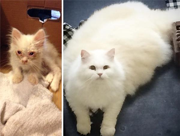 Đặt hai bức ảnh cạnh nhau, thật khó để tin rằng hai chú mèo này là một. (Ảnh: Bored Panda)