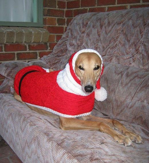 """""""Chó săn có bộ lông rất mỏng manh vì thế chúng sẽ rất lạnh vào mùa đông, nên những món quà của tôi là để giúp chúng được ấm áp ngoài trời"""".(Ảnh: Internet)"""