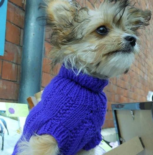 Tuy nhiên cô Jan không chỉ đan áo cho chó săn, cô còn đan áo cho tất cả các loài chó khác nữa. (Ảnh: Internet)