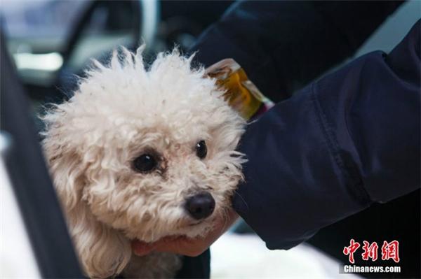 Vẻ mặt chú cún sau khi thoát khỏi nguy hiểm. (Ảnh: Shanghaiist)