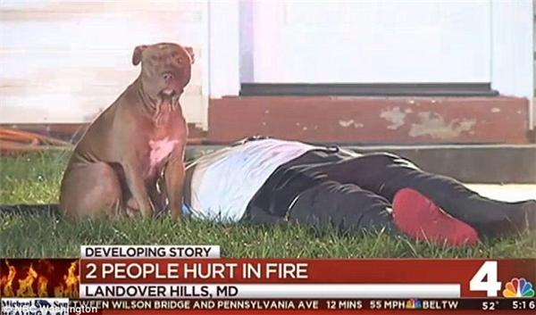 Hình ảnh chú chó trung thành và tận tụy xuất hiện trên sóng truyền hình. (Ảnh: Daily Mail)