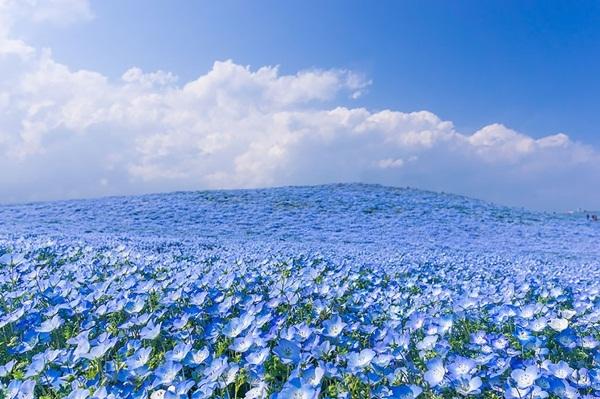 Người Nhật đã xây nên những công viên hoa tuyệt vời như thế nào?