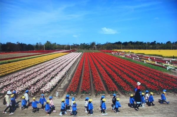 Công viên hoa tulip với gần 1 triệu bông Tulip ở tỉnh Niigata.