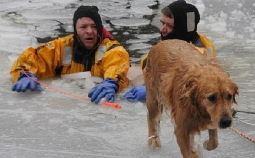 Những người lính cứu hỏa đã mang đến phép màu cho chú chó may mắn này.(Ảnh: Internet)