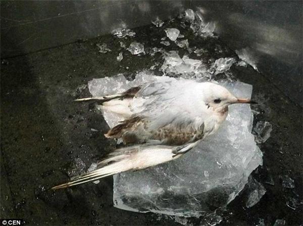 Cảnh sátđã phải cắt tảng băng ra khỏidòng kênh để giải cứu chú chim.(Ảnh: Internet)