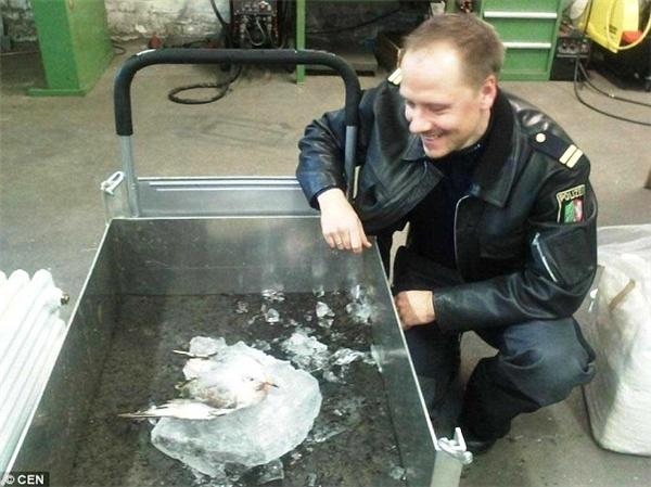 Một viên cảnh sát được cắt cử để trông chừng chú chim này.(Ảnh: Internet)